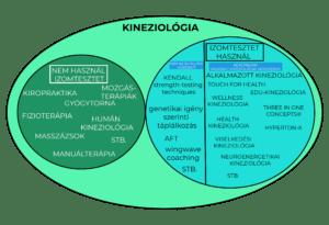 kineziológia módszerek
